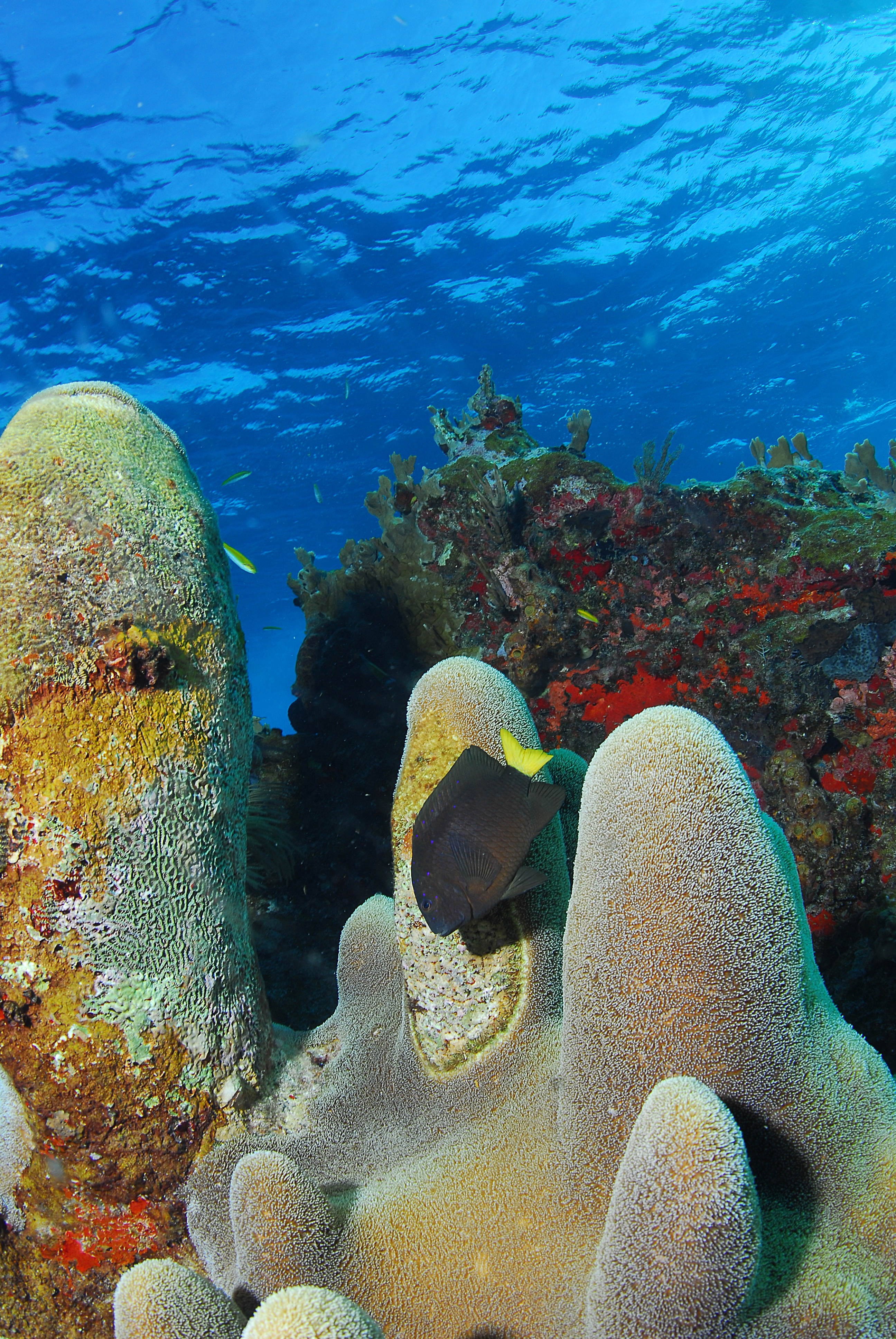 Blog :: Diving :: World And BVI Coral